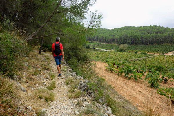 wandelen-langs-wijngaardenBC7D2ABA-969B-AEE4-43CE-3E68DF526AA0.jpg