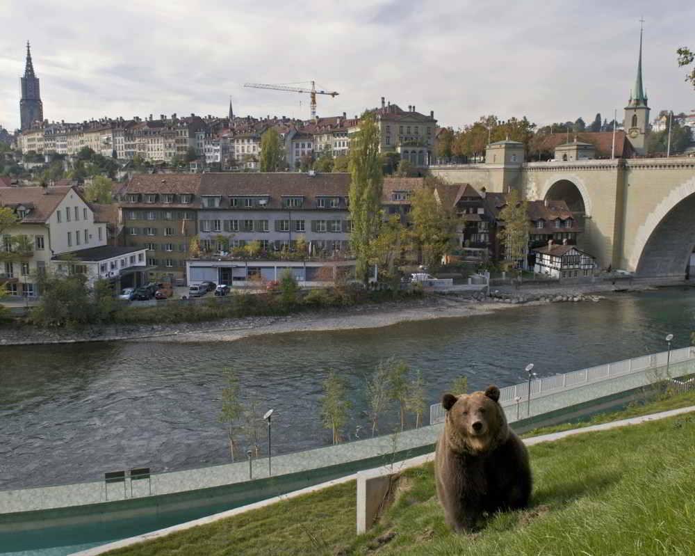 Bern staat in het teken van beren... inclusief de 'echte'