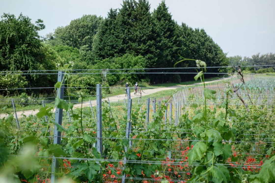 Fietsen langs wijnranken in Tsjechië