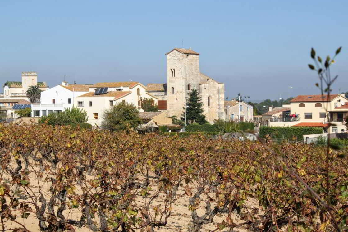 Wijnranken met dorpje op de achtergrond in Penedès