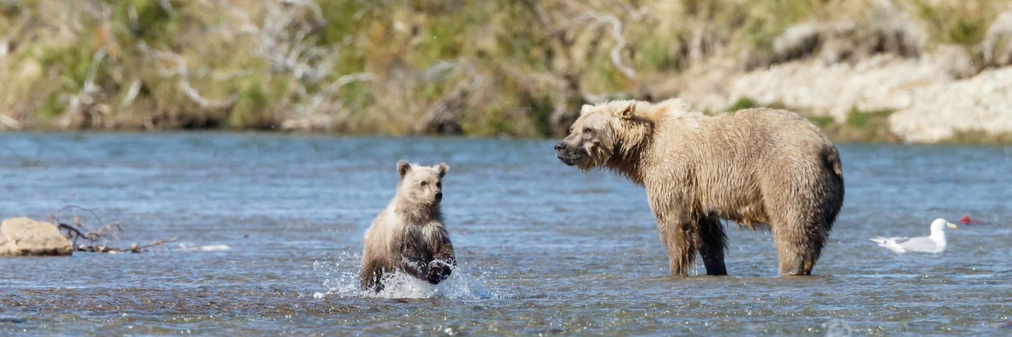 header foto tips in berenland