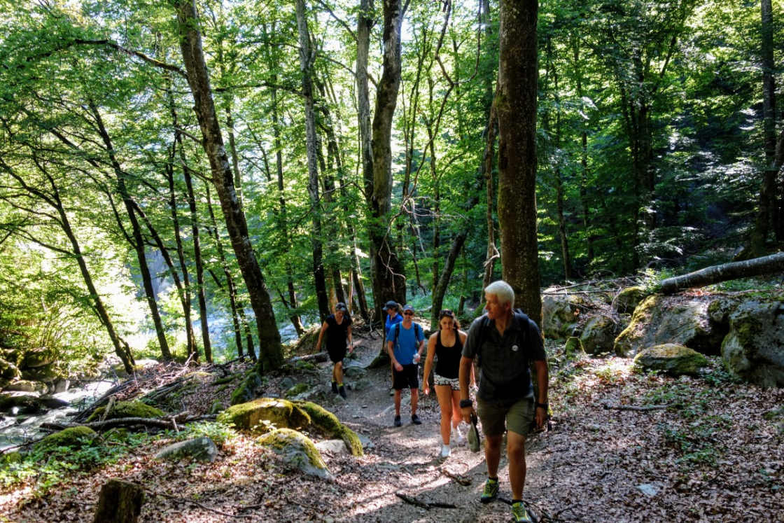 Groep wandelaars op een pad in het bos