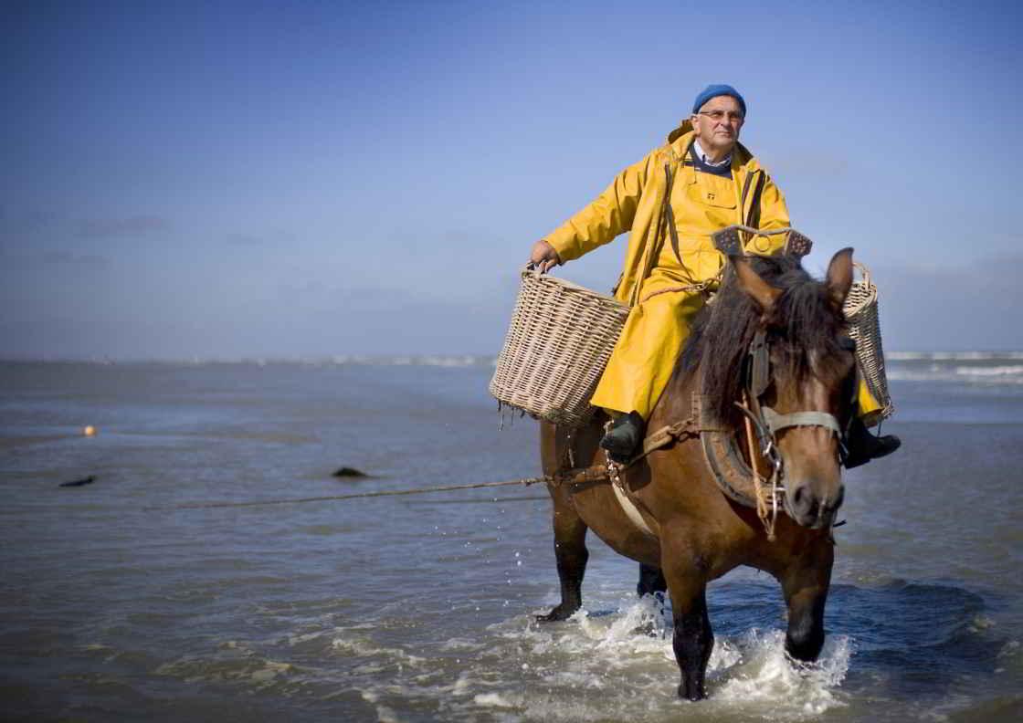 Nog steeds kun je seynevissers aan het werk zien aan de Vlaamse kust